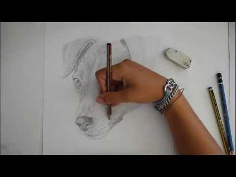 Speedpaint disegno di un jack russel cane disegno libero youtube for Disegni di cavalli a matita