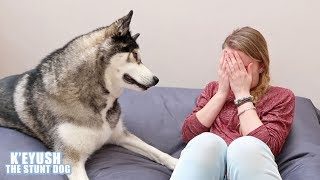 Husky's Cute And Funny Reactions To Me Crying!