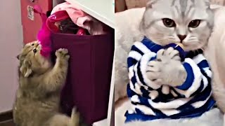You Will Die Laughing When You Watch This Ep 10 Funny Cats Vines Compilation