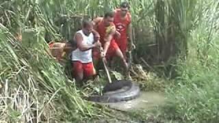 Bắt trăn khổng lồ ở Amazon