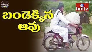 Pakistan Man Rides Bike with Cow | Jordar News | hmtv