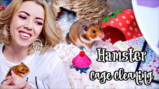 HAMSTER CAGE CLEANING & CAGE TOUR   Syrian Hamster
