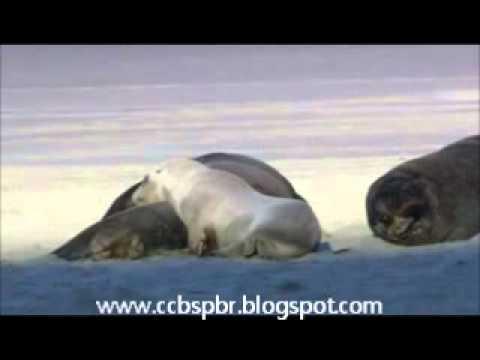 Baixar CCB Testemunho a Troca de uma Jóia pelo dons De Deus - www.ccbspbr.blogspot.com.wmv