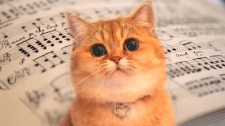 Cats Sing Fur Elise -  Beethoven | Classical Music  - Cats Version