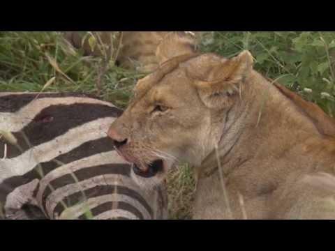 Mbali Mbali Soroi Serengeti Lodge