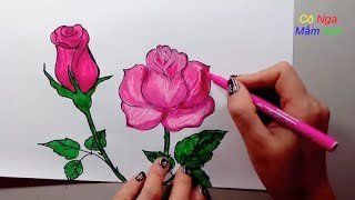 Hướng dẫn vẽ hoa hồng đơn giản- How to draw a rose - How to Draw + Color a Rose Super EASY Realistic