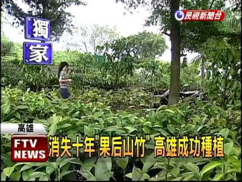 「山竹」消失10年 高雄成功種植-民視新聞