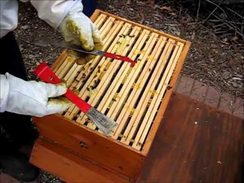 Backyard Beekeeping Part 22(S3:E1): Spring Management