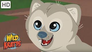 Wild Kratts - Reasons Why We Love Wild Animals | Kids Videos
