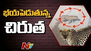 Cheetah caught in CCTV at Hyderabad..
