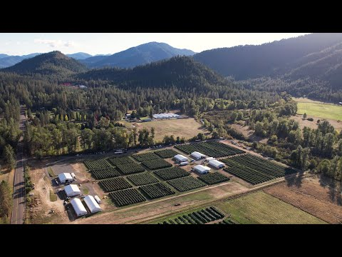 Halo Collective today announced a significant expected increase in yield and number of strains across its 11 acres of owned or contracted outdoor cultivation in the state of Oregon, which is almost four times the flower harvested at the Company's owned or managed Oregon farms during the 2020 season.