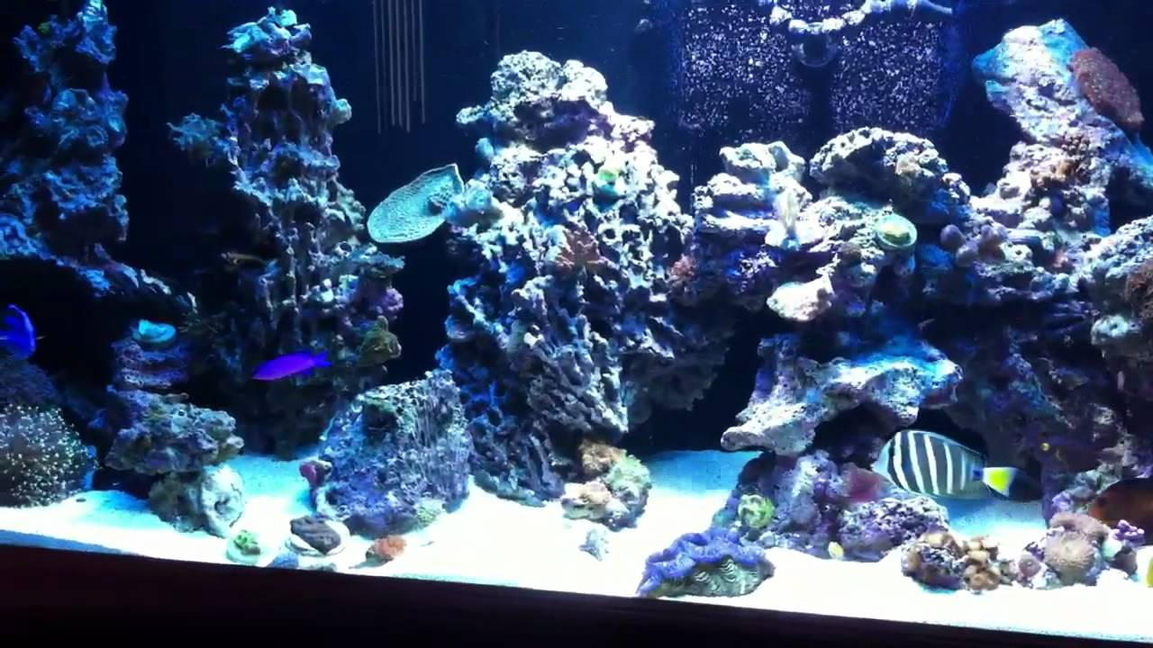 Rockscape or aquascaping on 240 gallon reef aquarium - YouTube