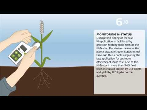 Wheat Quality: How to increase proteins?