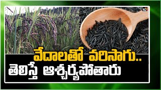 Meet the man who cultivates 'Black Rice' using Vedas..