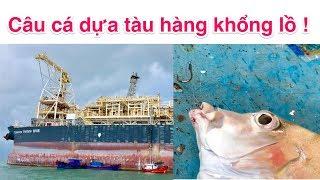Câu cá dựa tàu hàng khổng lồ ngoài khơi biển Vũng tàu - Cá Mú, cá Bàng Sa, cá Sòng.