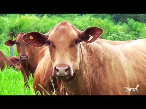 Conheça o Projeto TAMA, o Senep...