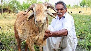 Traditional Goat Biryani Recipe | Lamb Biryani Recipe | Famous Hyderabad Mutton Biryani by grandpa