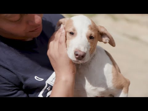 The Petco Foundation and Victoria Stilwell honor Unsung Heroes across the nation for their extraordinary lifesaving efforts for pets in need. These inspiring stories prove the difference that one person can make in creating a better world for pets.