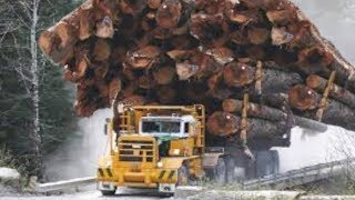 Xe tải chở gỗ bá đạo đến khó tin