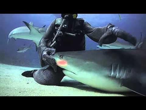 Petting a Tsundere Shark