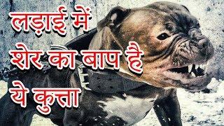 ❌लड़ाई में शेर का भी बाप है ये कुत्ता | MOST DANGEROUS DOGS IN THE WORLD