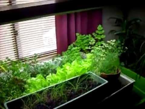 Indoor Aquaponics Garden Free Food Youtube