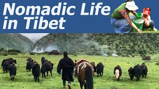 A Day in the Life of a Tibetan Nomad Family; How do Tibetan Wife and Husband Divide Their House Work