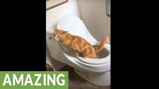 Uzeo je kameru i polako ušao u svoje kupatilo. Ono što je snimio na WC šolji nešto je najluđe što smo vidjeli u posljednje vrijeme! (VIDEO)