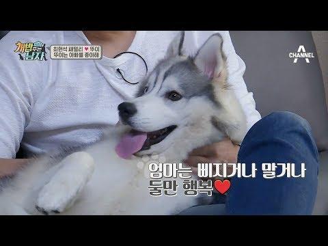[예능] 개밥주는남자 시즌2 28회_171104 이태곤, 비글 남매와 첫 병원 방문! 등