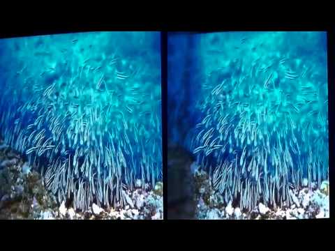 Under The Sea IMAX Trailer in 3d Cam