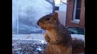 Squirrel Freezes Like Statue With Nuts in Her Mouth for No Apparent Reason