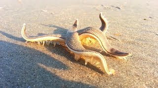 10 SCARY Things Washed Up On Beaches!