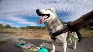 Husky takes our Chimp Deck for a Ride