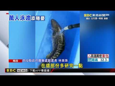 日月潭電魚除魚虎 民眾憂萬人泳渡安全 @東森新聞 CH51