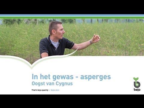 Oogst van Cygnus asperges