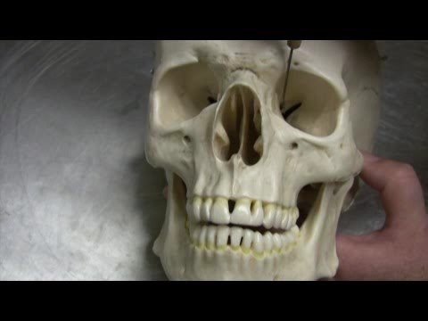 Baixar Dr. Fabian Identifying Parts of the Skull Part 1 of 2
