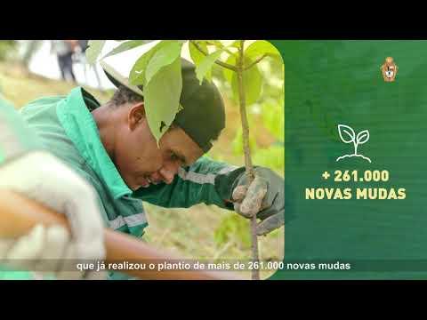 Manaus meio ambiente