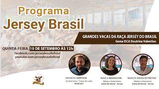 Grandes Vacas da Raça Jersey do Brasil - Programa Jersey BR #9