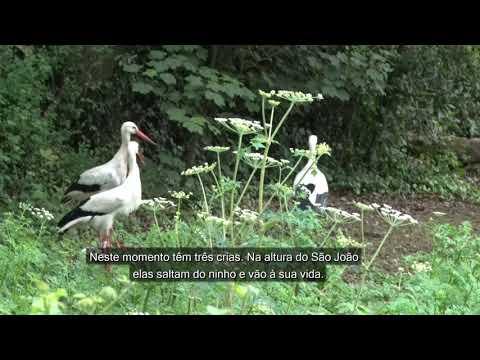 Nasceram cegonhas no Parque Biológico