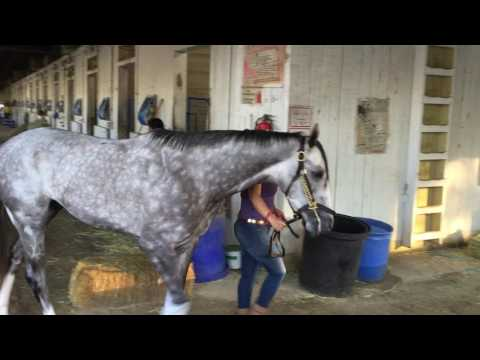 Belmont Stakes: Creator Morning After
