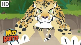 Wild Kratts - Showcasing Beautiful Animals #2 | Kids Videos