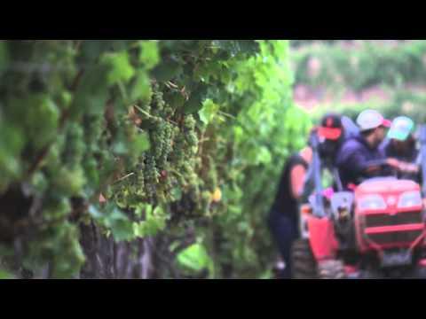 Benziger Estate Sauvignon Blanc Harvest 2015