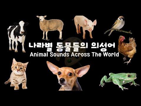 데이브[나라별 동물들의 의성어 ] Animal Sounds Across The World