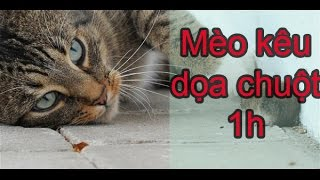 Tiếng Mèo Kêu dọa chuột chạy mất bật lên 30 phút