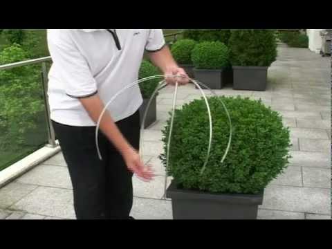 buchsbaum schneiden mit egrola kugelschnitt youtube. Black Bedroom Furniture Sets. Home Design Ideas