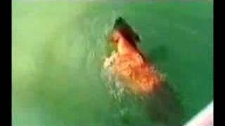 イヌVSサメ1