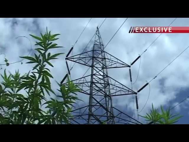 Cutting trees for Kaiga power generating plan