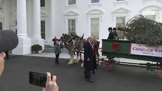 President Trump and the First Lady Participate in the White House Christmas Tree Delivery