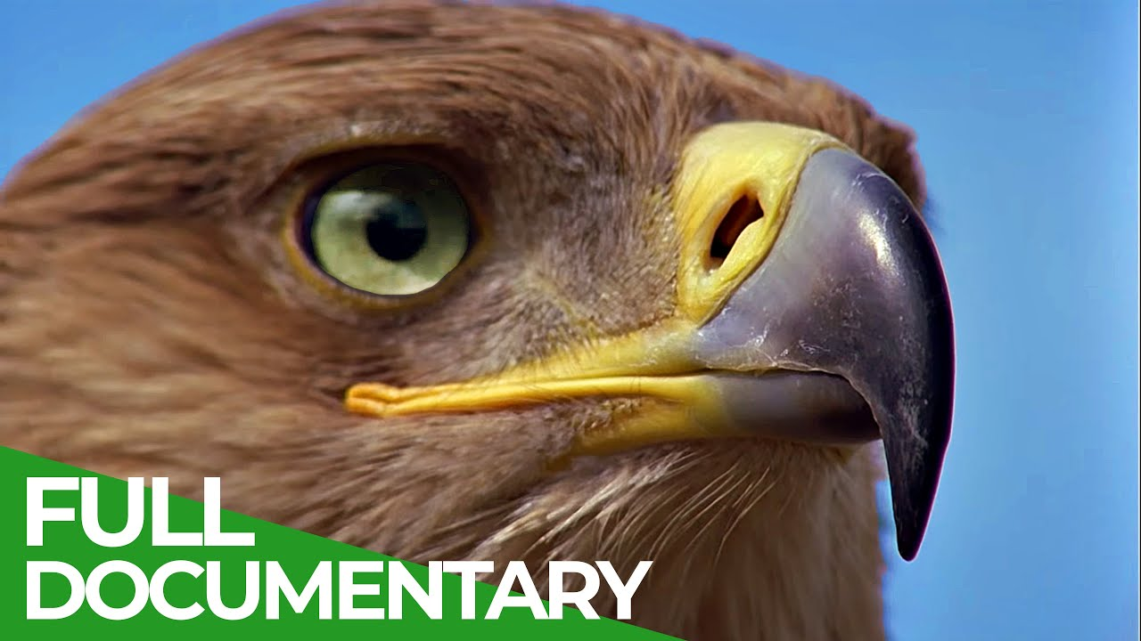Hunters of the Sky - Europe's Birds of Prey | Free Documentary Nature