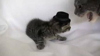 Kitten Wearing a Tiny Hat - Audition Outtakes